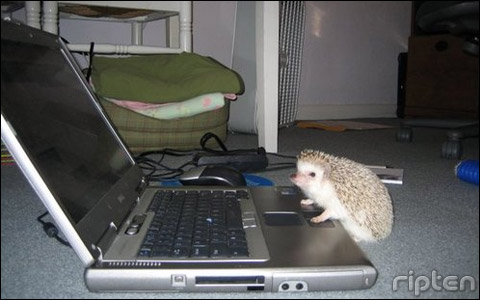 cute_hedgehog.jpg