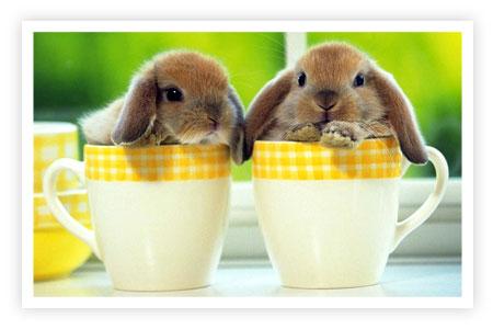 http://www.fordsweb.co.uk/emz/photogallery/animals/rabbits.jpg